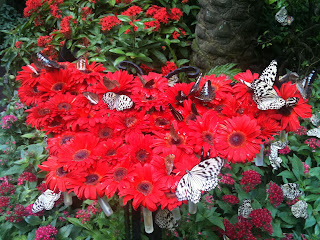 red butterfly along with red flowers