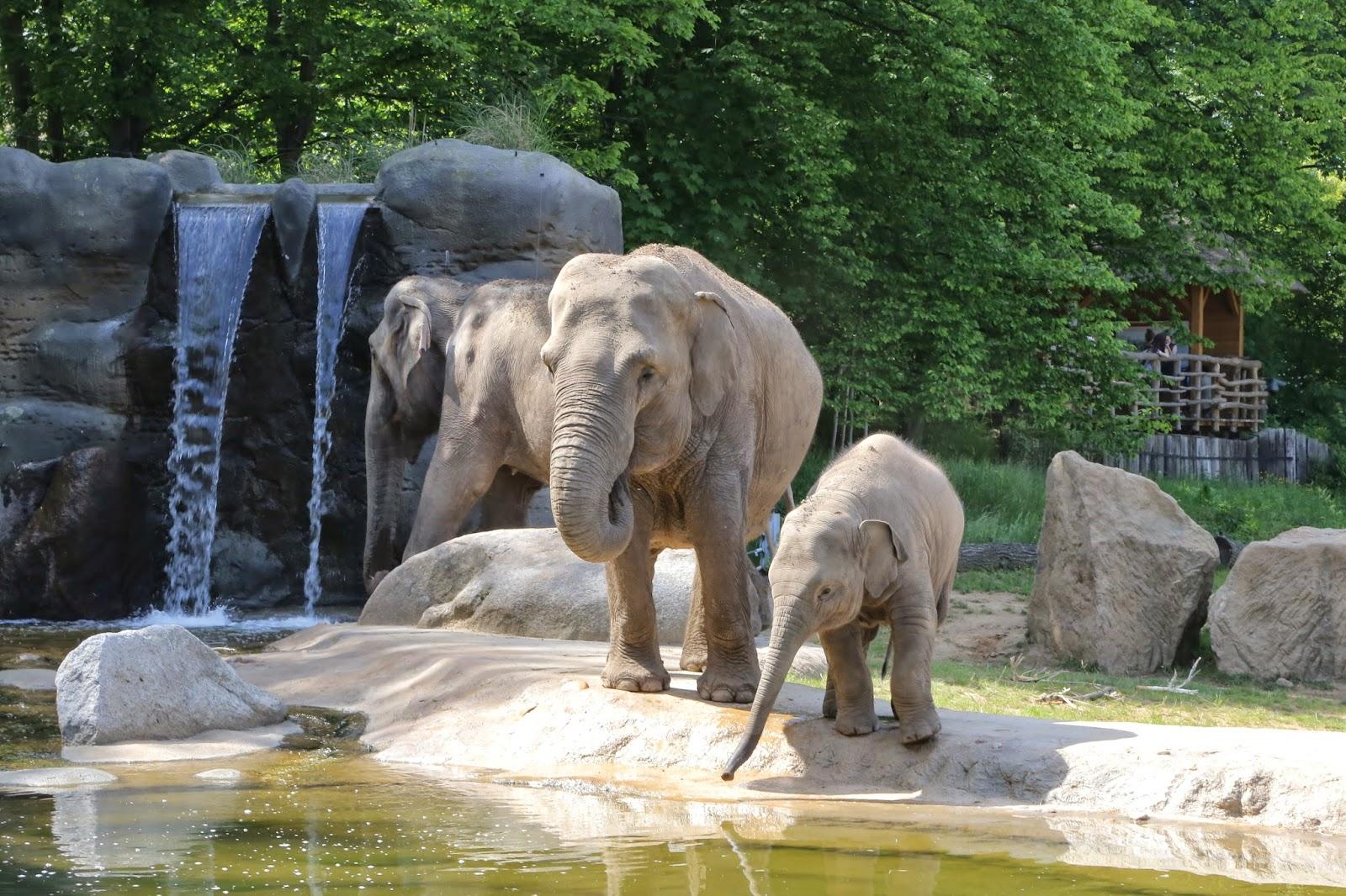 Praha Eläintarha