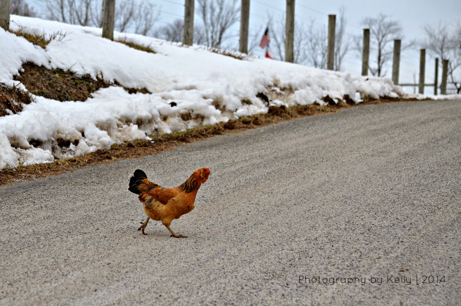 Image result for chicken cross the road