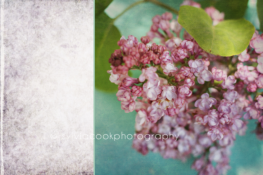 lilacs with textures
