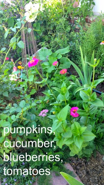 pumpkins, cucumbers, blueberries, tomatoes