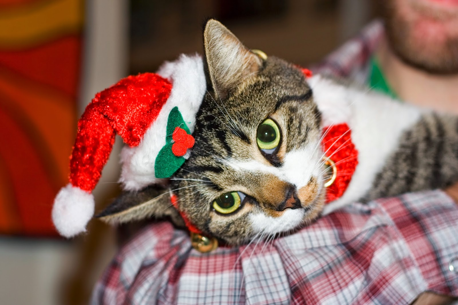 Funny Cat Christmas