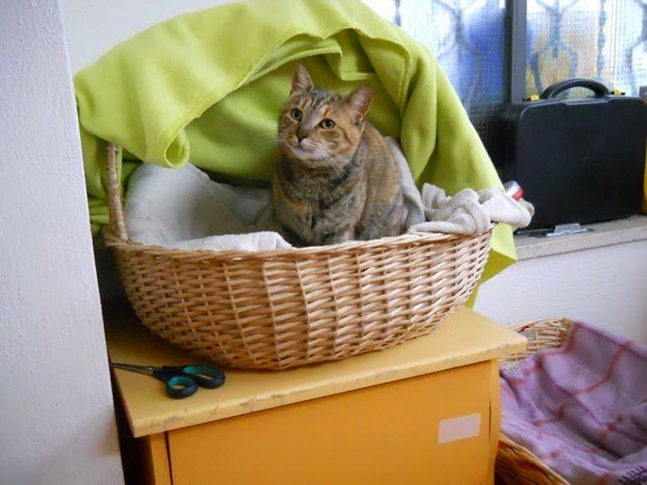 gatti adozione sos gatti