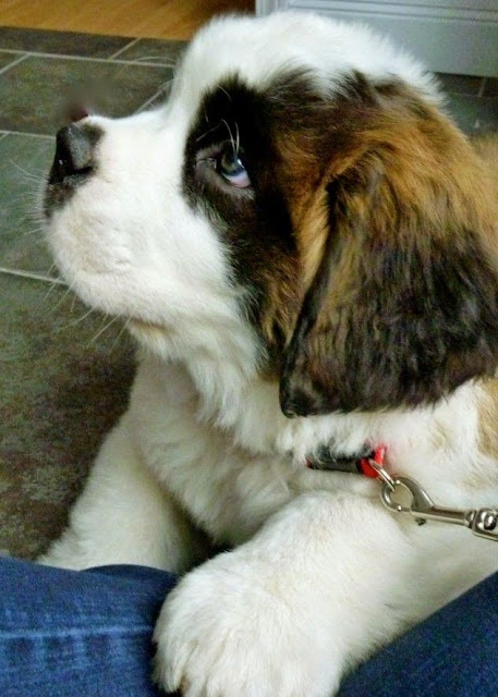 The 5 Most Loyal Dog Breeds