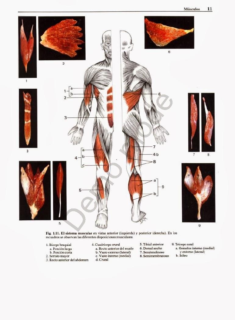 Atractivo Agujeros Fundamentos De La Anatomía Humana Y Fisiología ...