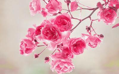 Papel de Parede Lindas Flores Rosas para pc 3d hd gratis rose flowers desktop wallpaper hd