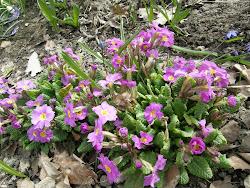 Mera blommor