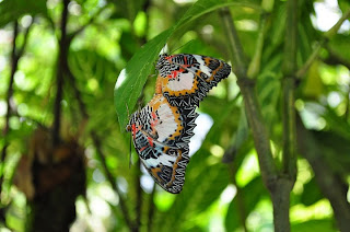 Panglao Island Butterfly Farm