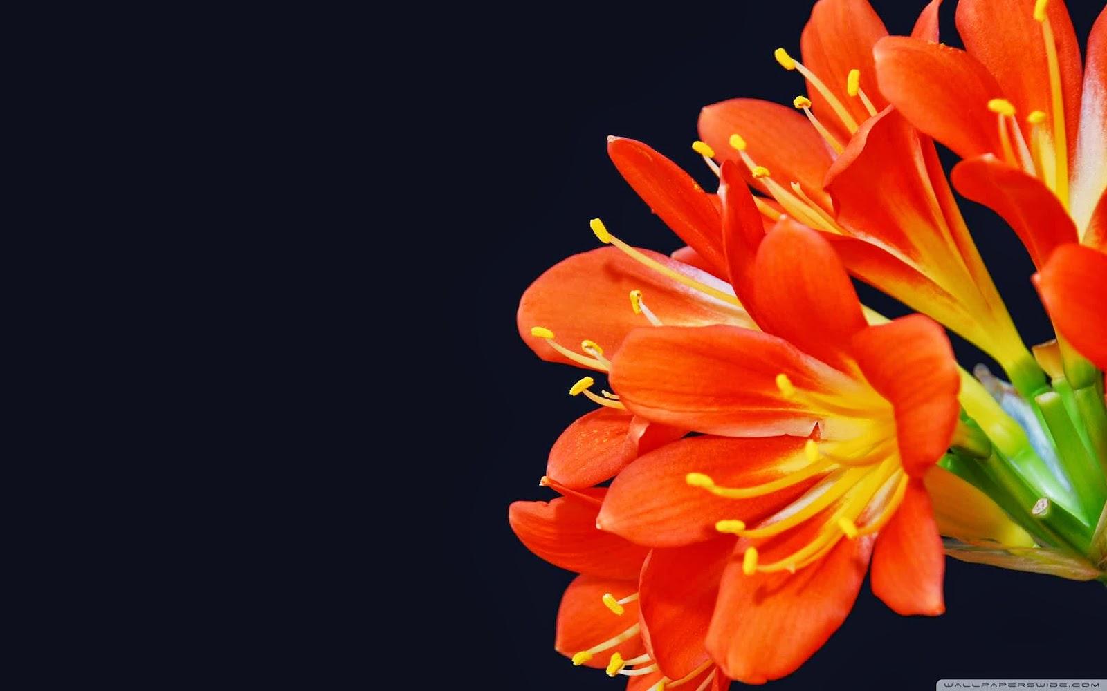 bush lily wallpaper