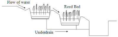 Reed Bed Construction Design