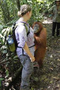 orangutan want to rob bag from tourist