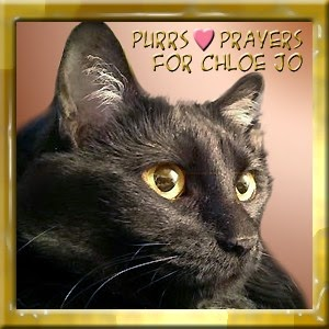 Purrs and Prayers for Chloe Jo