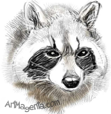 Raccoon by ArtMagenta