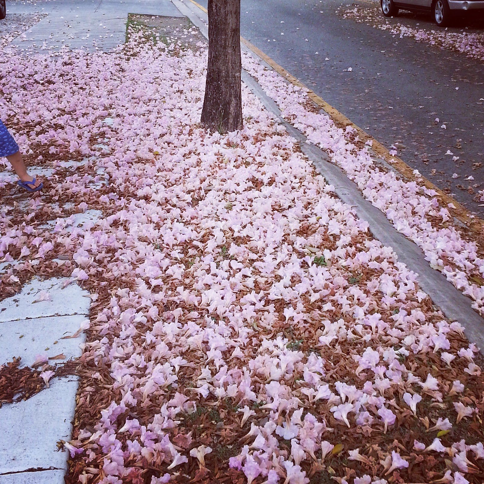 Photo of Spring pink flowers on the footpath of a suburban street