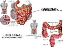 http://greenworldindonesia.org/obat-herbal-tbc-usus/