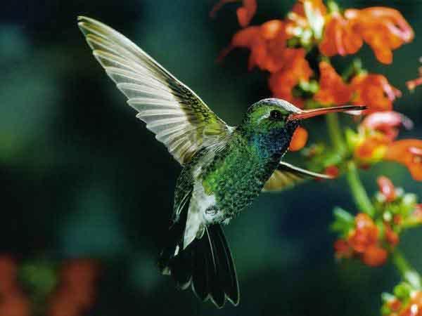 นก นับ เนื่อง ไป ตั้งแต่