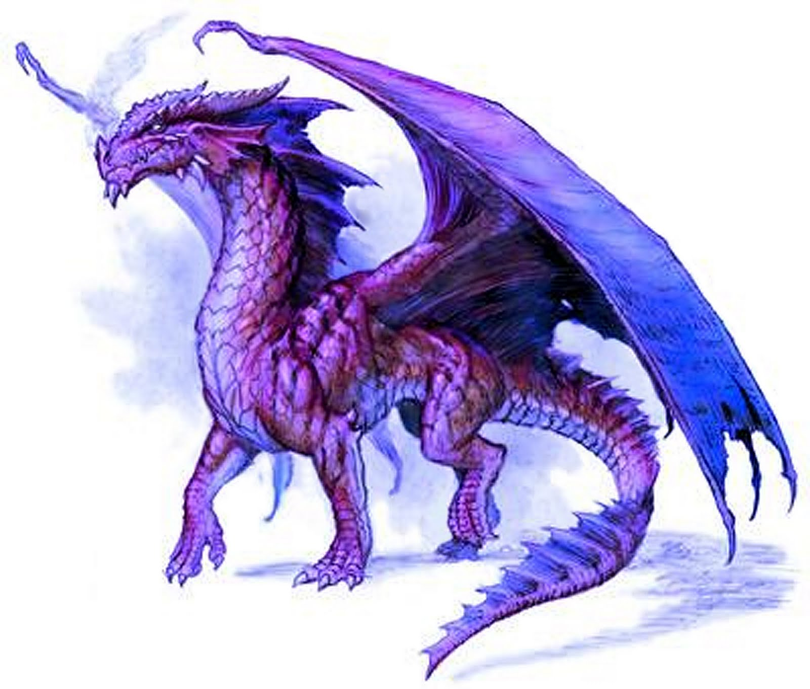 purple-dragon,fantasy, epic, animal, myth, how-to-train-your-dragon-3d-movie-review-blog-trailer,Dragon HD Wallpaper