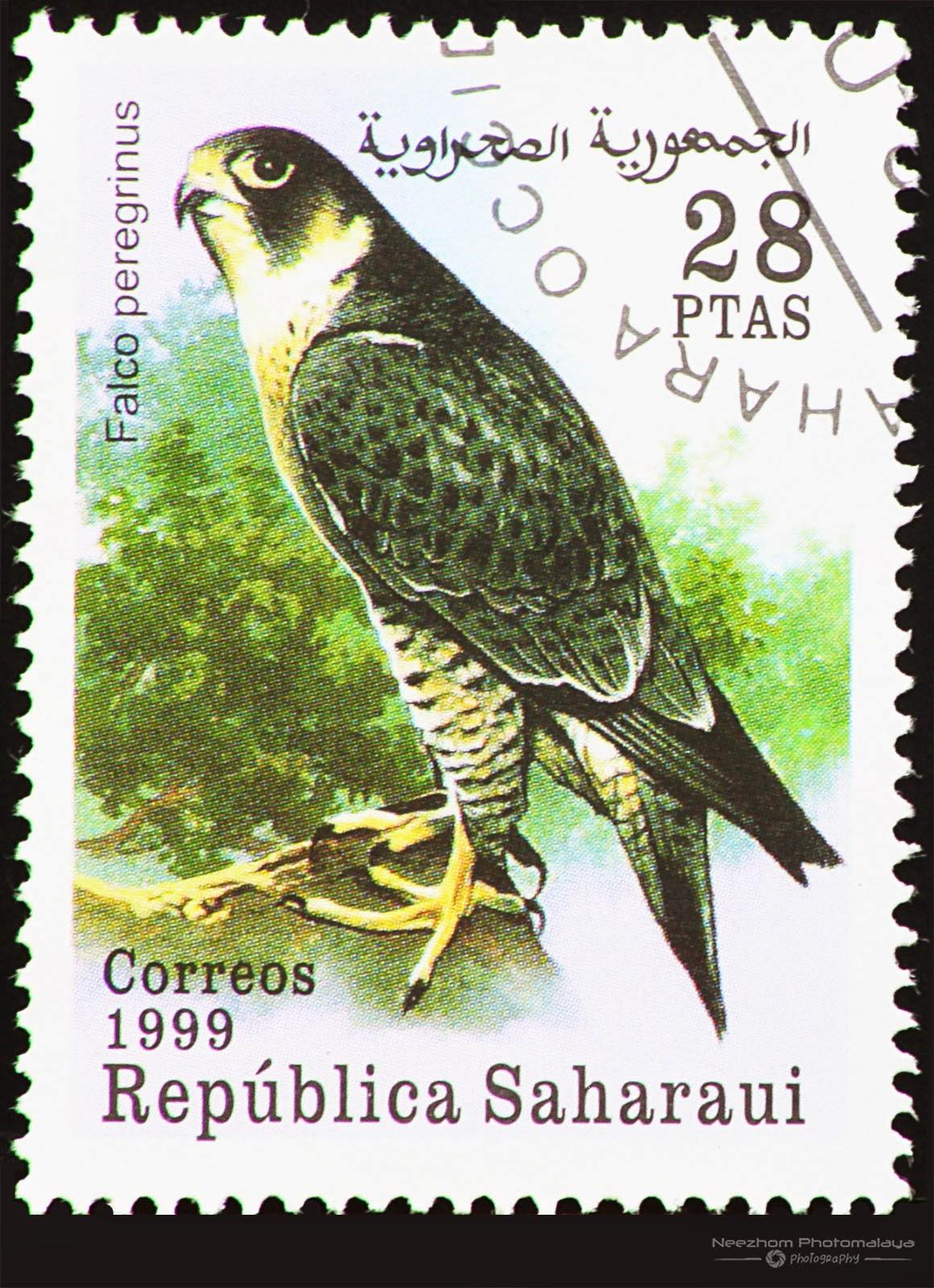 Western Sahara 1999 Birds of Prey stamp - Peregrine Falcon (Falco peregrinus) 28 ptas