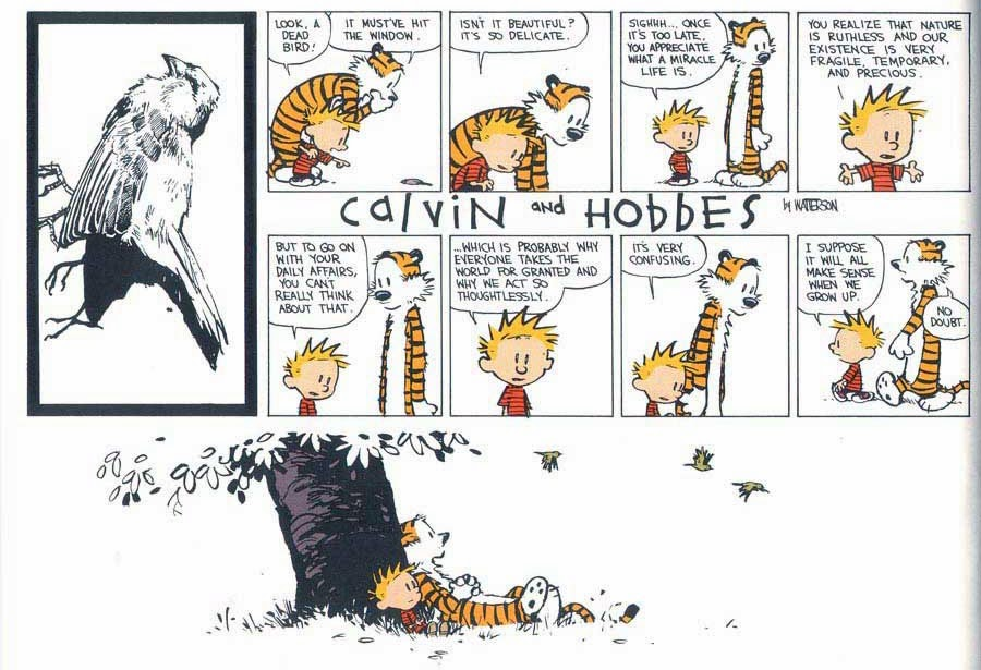Endless Love For Calvin Hobbes And My 17 Favorite Strips
