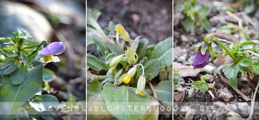 vårtecken, vårtecken 2013, första vårtecken, signs of spring, spring 201 3, vår 2013