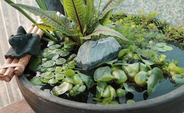 Container water garden ideas