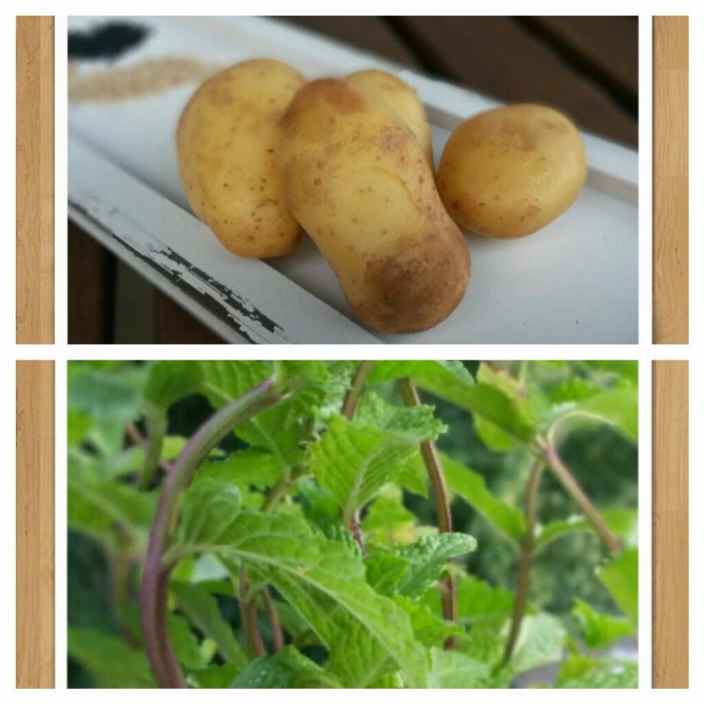 Kartoffeln Minze