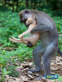 قمة الحنان والعطف من القرود للقطة!