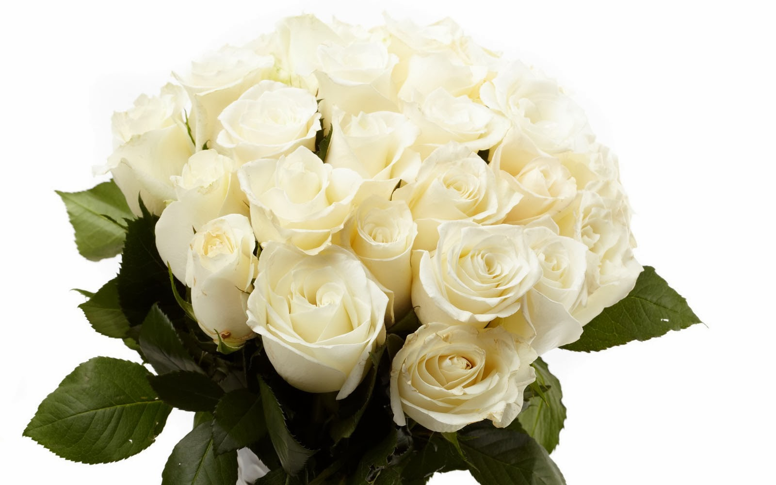 Wallpapers white rose bouquet