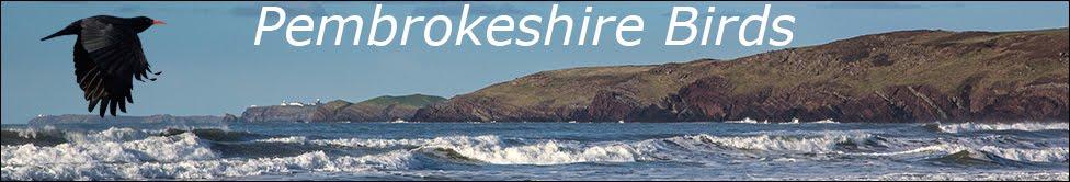 Pembrokeshire Birds