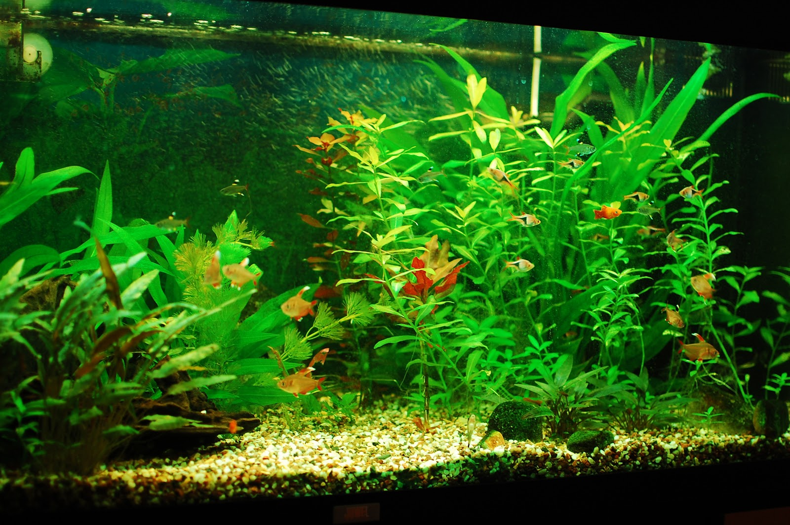 You should ask yourself before starting a freshwater aquarium for Spring water for fish tank