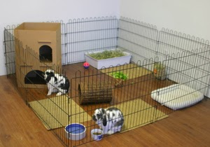 The bunny hut indoor rabbit cages the good the bad and for Exterieur konijn