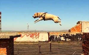 Amazing Parkour Dog – Best Dog Trick