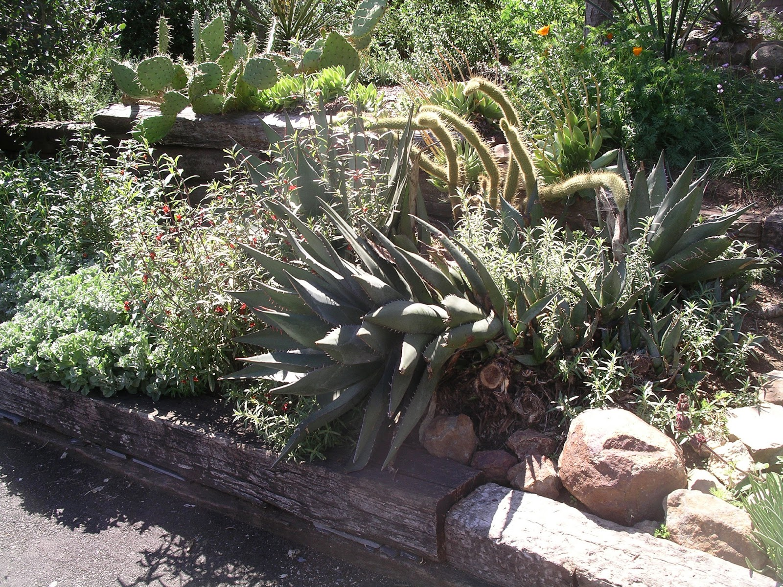 A California Native Plant Garden In San Diego County
