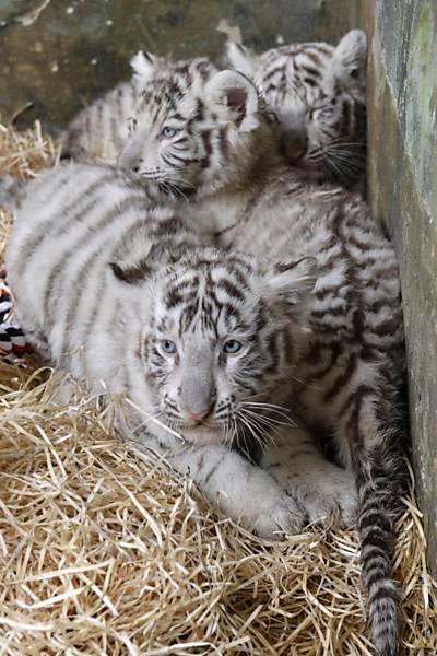 os três filhotes juntos