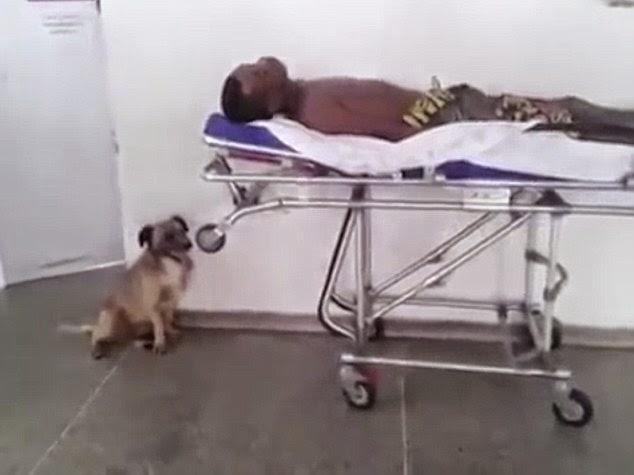 perro persigue a la ambulancia que lleva a su dueño.