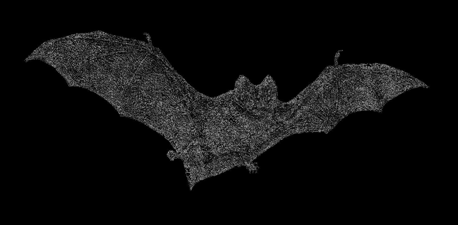 free halloween clipart bats - photo #19
