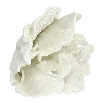 white coral for decor