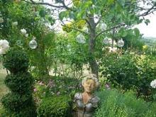 buste près de la pergola de roses