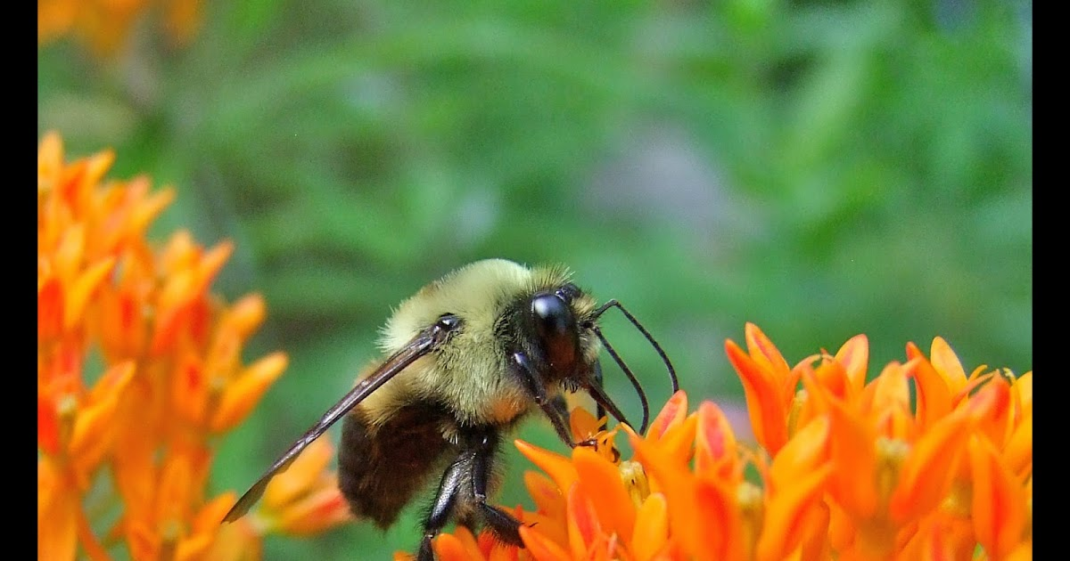 A Few Good Reasons To Plant For Pollinators
