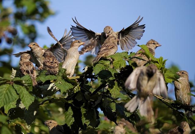 प्यारी चिड़िया फोटो