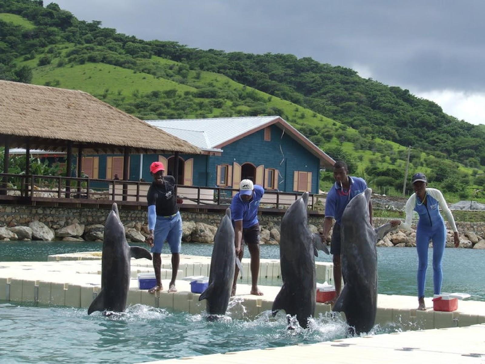 dolphin cove jamaica. Black Bedroom Furniture Sets. Home Design Ideas
