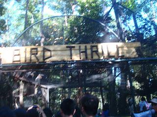 bird thrill gate in Zoobic Safari