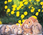 Imágenes de Animales Domésticos: imagenes animales conejos