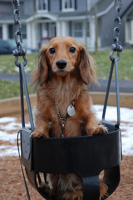 Cute Swinging Dogs Seen On www.coolpicturegallery.us