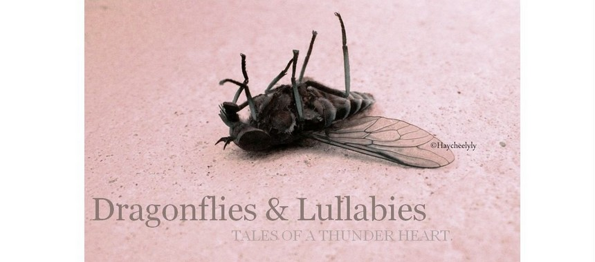 Dragonflies & Lullabies