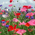 Mix wild flowers sceneries wallpapers.