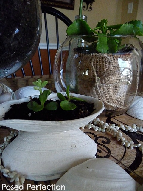 burlap wrapped plant in glass bowl with succulents