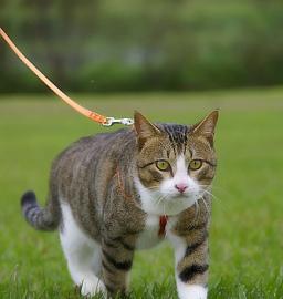 Tenere il gatto in casa o fuori pets life - Gatto defeca per casa ...