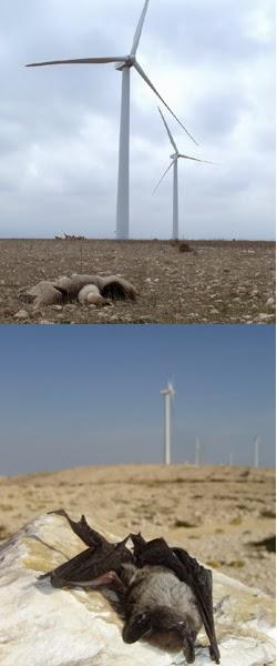 I Congreso Ibérico sobre Energía Eólica y Conservación de la Fauna
