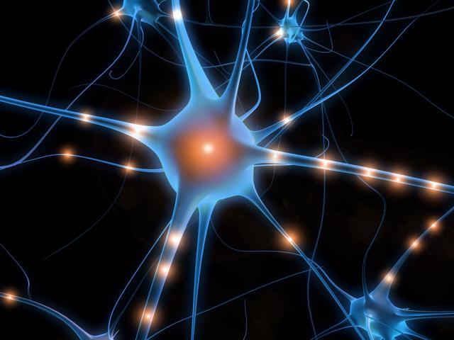 Resultado de imagen de Los procesos neuronales que subyacen en nuestro cerebro son en realidad desconocidos